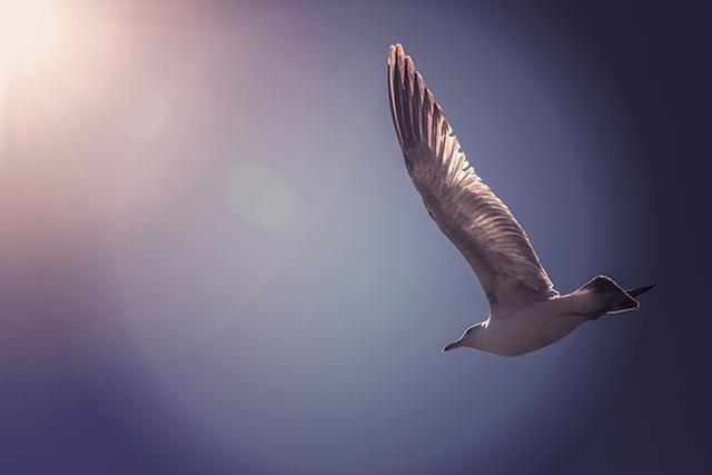 気分よく空を飛ぶ夢占い