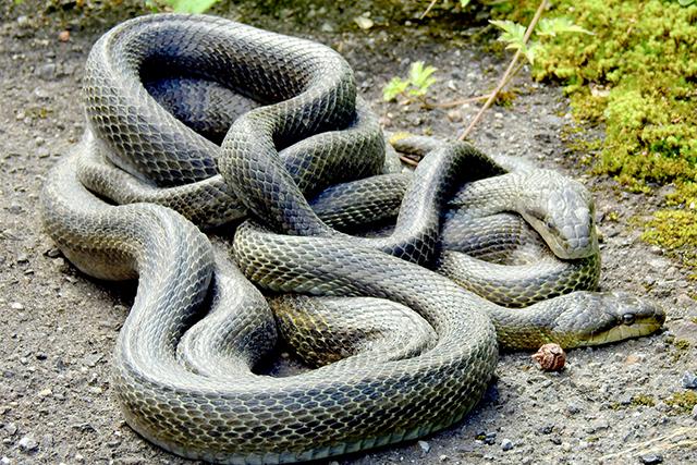 無料夢占い蛇が出てくる夢の意味アオダイショウメッセージ