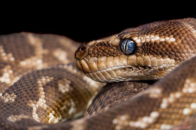 無料夢占い蛇が出てくる夢の意味大蛇メッセージ