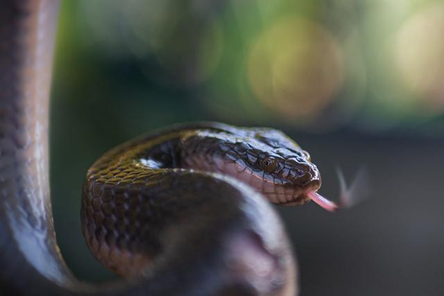 無料夢占い蛇が出てくる夢の意味噛まれるメッセージ