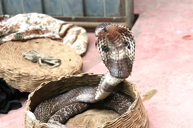 無料夢占い蛇が出てくる夢の意味毒蛇メッセージ