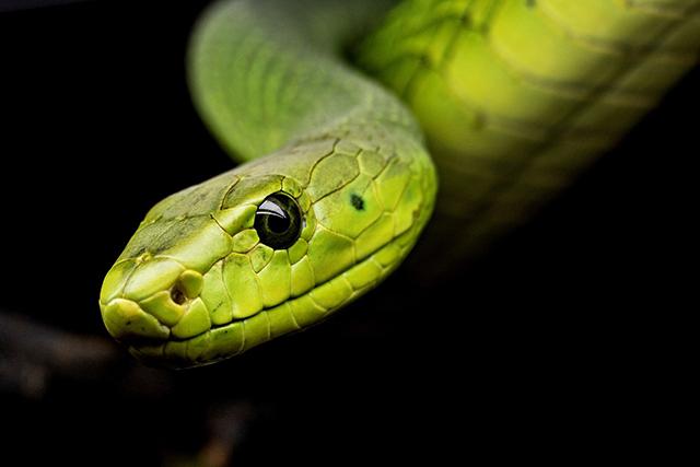 無料夢占い蛇が出てくる夢の意味新スタート