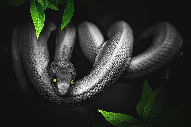 無料夢占い蛇が出てくる夢の意味銀色蛇メッセージ