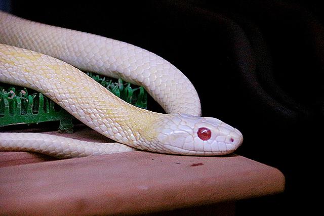 無料夢占い蛇が出てくる夢の意味白蛇メッセージ