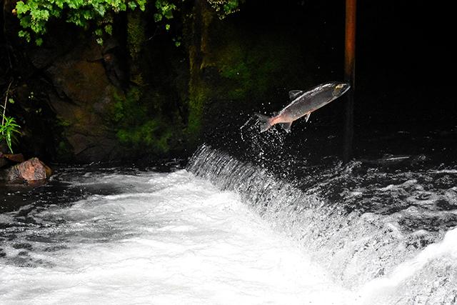 川に魚がいる夢の意味メッセージ深層心理