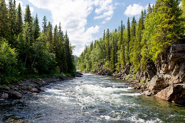 無料夢占い川の夢の意味メッセージ深層心理