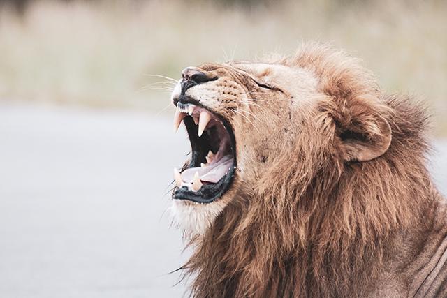 猛獣動物から逃げる夢の意味メッセージ