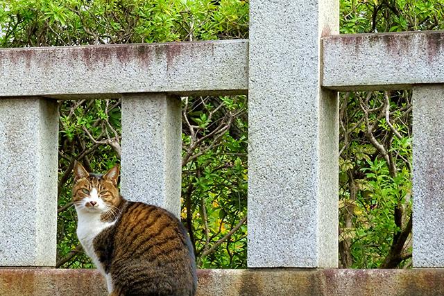 神社に動物がいる夢の意味メッセージ暗示