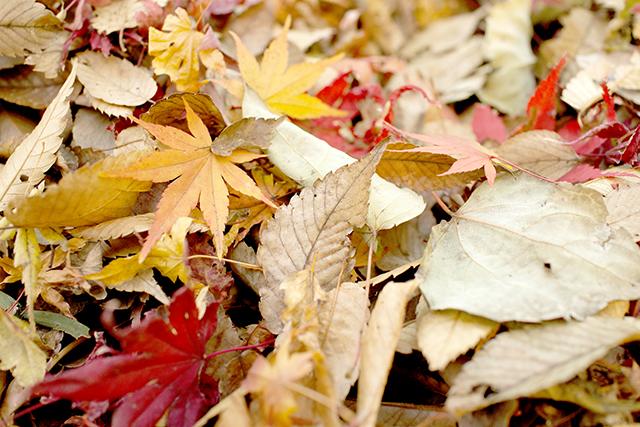 枯れ葉が目立つ秋の夢の意味