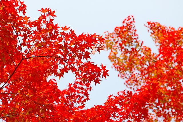 紅葉している秋の夢の意味メッセージ