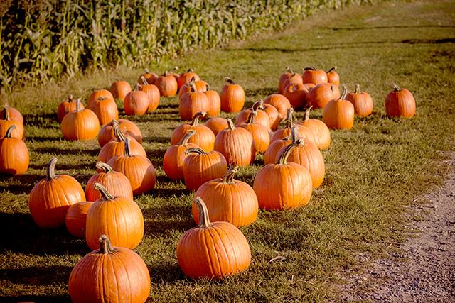 作物が実る秋の夢の意味メッセージ