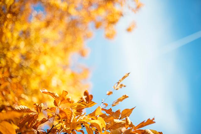無料夢占い秋の夢の意味メッセージ深層心理きっかけ