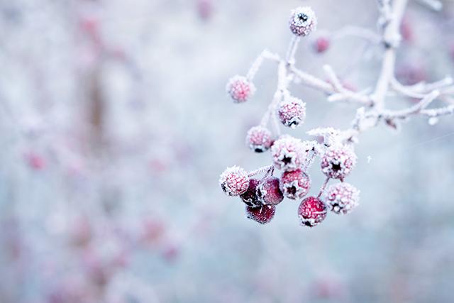 秋から冬に季節が変わる夢の意味