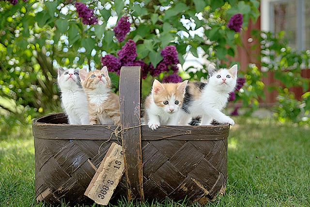 多数の猫が自由に飛び跳ねている夢の意味