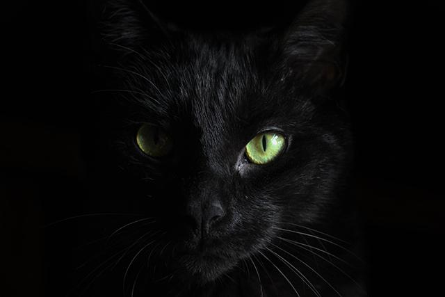 夢の中で黒猫を抱える夢の意味