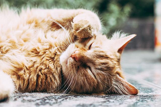 年老いた猫の夢の意味