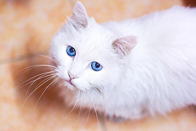 夢の中で白猫にじっと見られる夢の意味