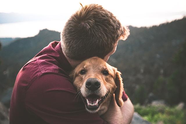 犬を抱く夢の意味