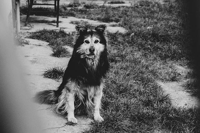 捨て犬怪我をしている犬怯えている犬の夢の意味