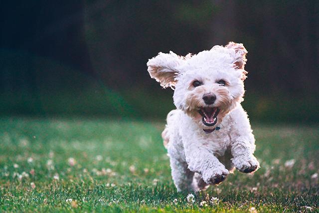 犬が全力疾走している夢の意味
