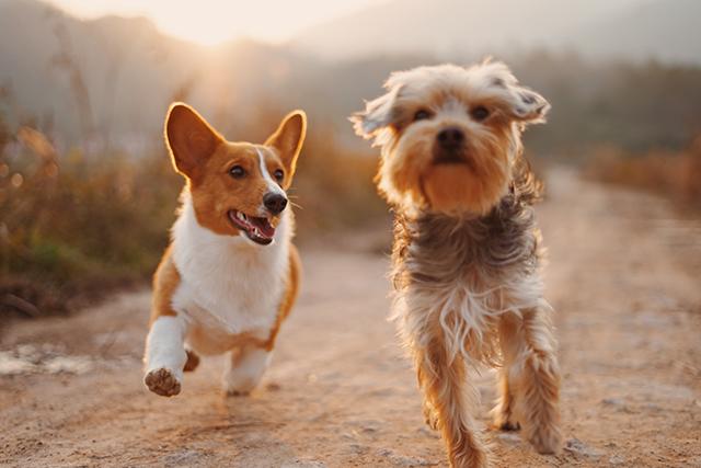 自分も犬になって多数の犬と走り回る夢の意味