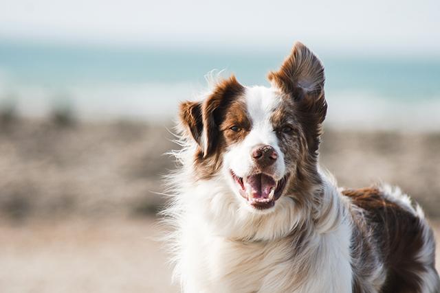 無料夢占い犬の夢は自分を写し出したもの