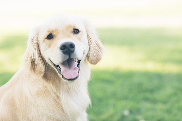 無料夢占い犬の夢の意味