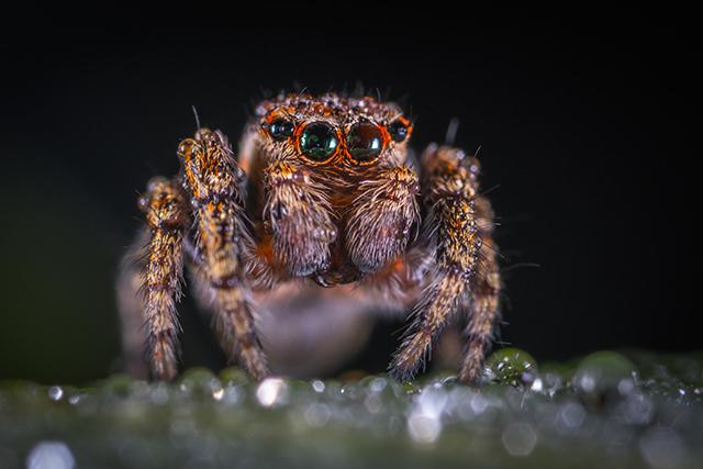 自分が蜘蛛になる夢の意味