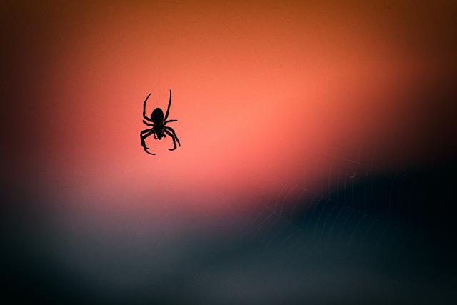 蜘蛛の巣が出てくる蜘蛛の夢の意味