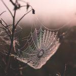 無料夢占い気になる蜘蛛の夢の意味心理状況