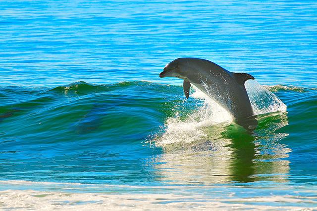 イルカやクジラが出てくる海の夢の意味メッセージ
