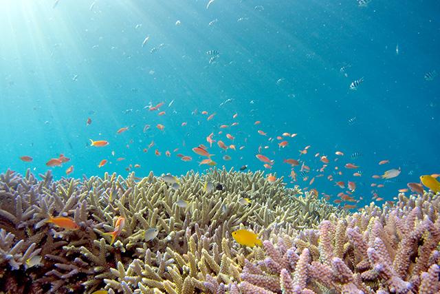 無料夢占い海の夢の意味心の状態の表れ