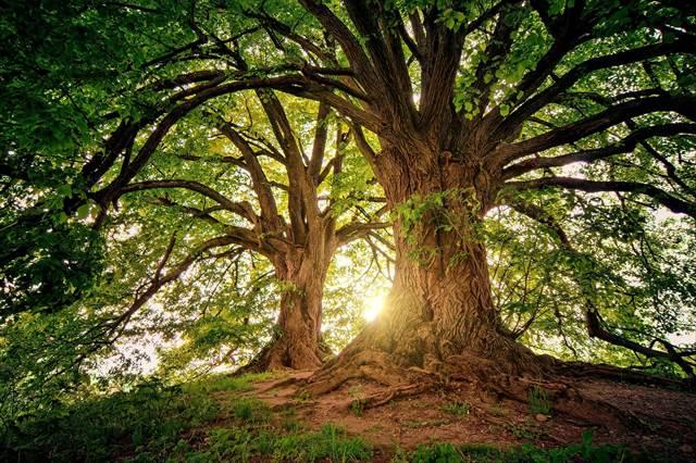 木陰で涼む夢の意味