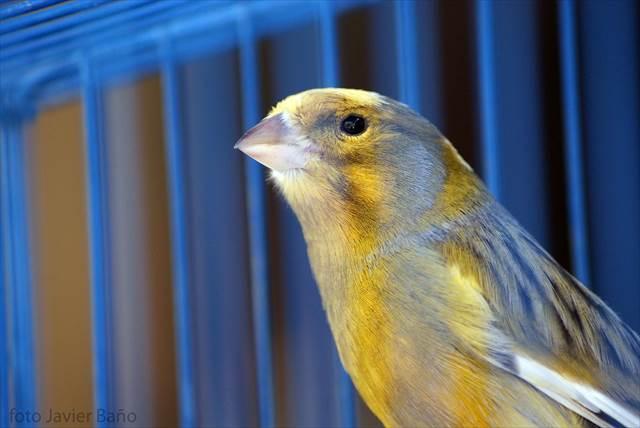 鳥を逃がす夢の意味