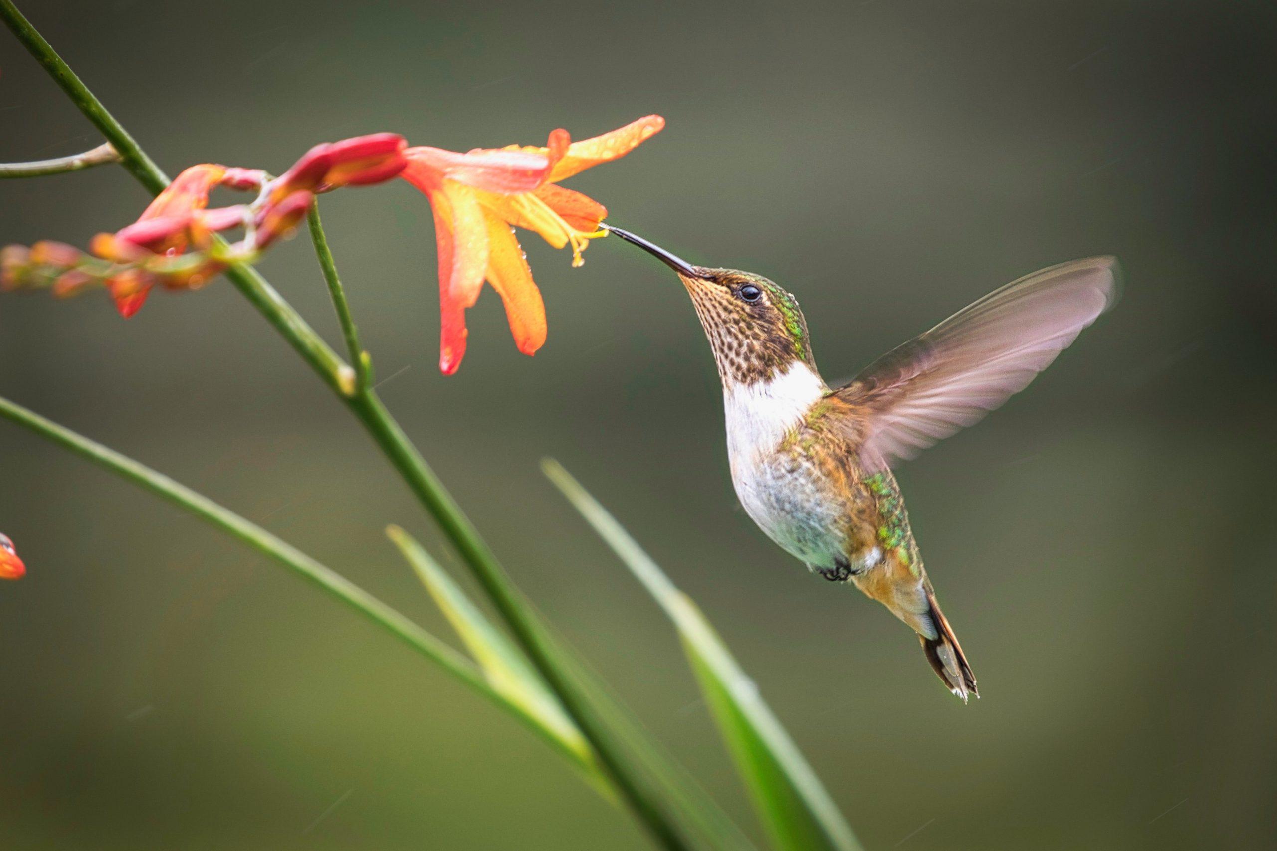 鳥の夢が持つ意味とは何か