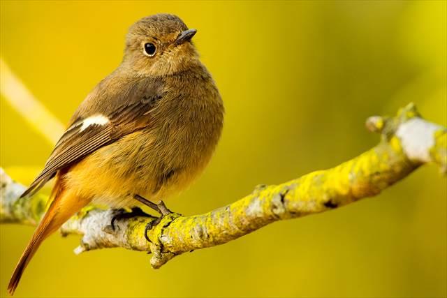 金色の鳥の夢の意味