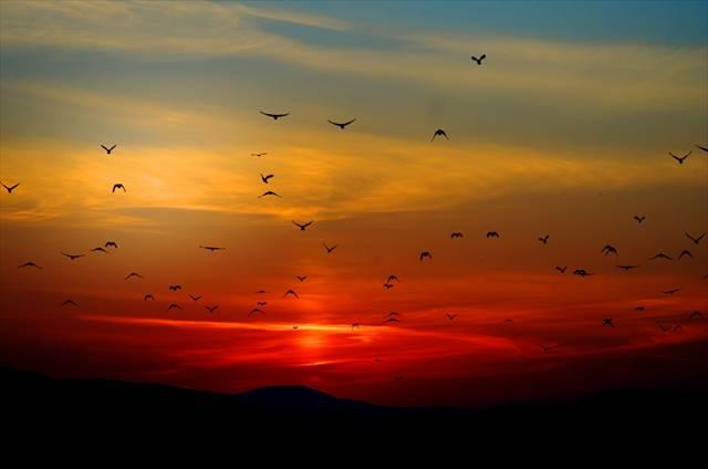 無料夢占い鳥の夢の意味危機回避のヒント