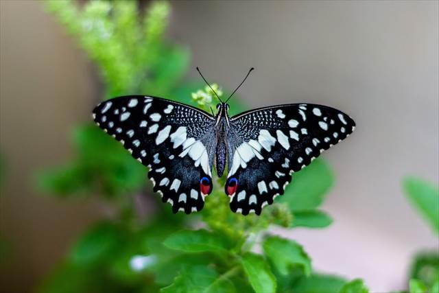 蝶々の夢の意味