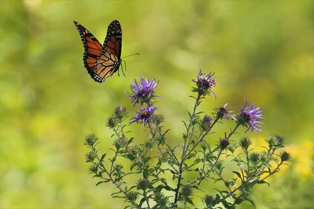 蝶々が飛んでいる夢の意味