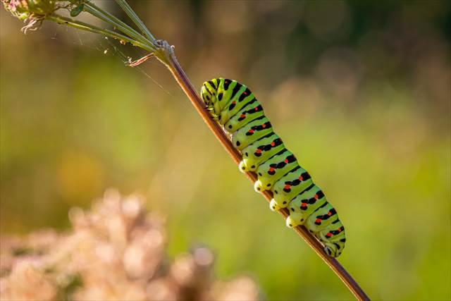 毛虫を離れたところから見ている夢の意味