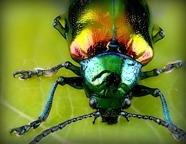 昆虫の夢の意味