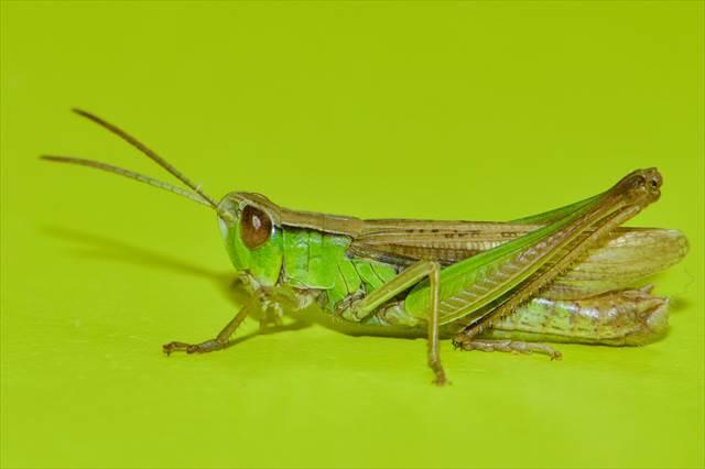 大きな昆虫が出てくる夢の意味
