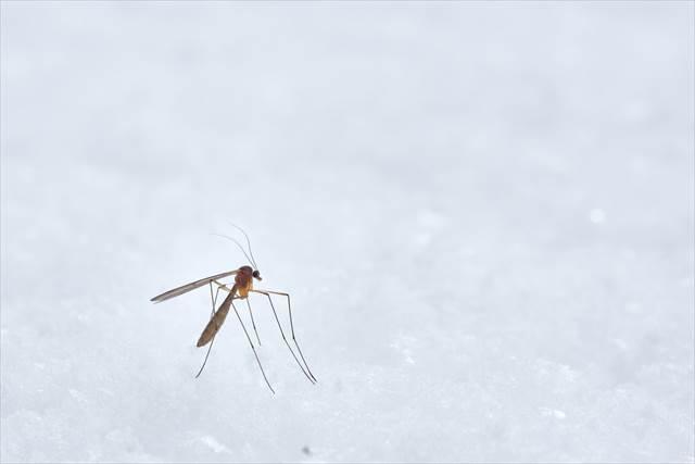 小さな昆虫が出てくる夢の意味