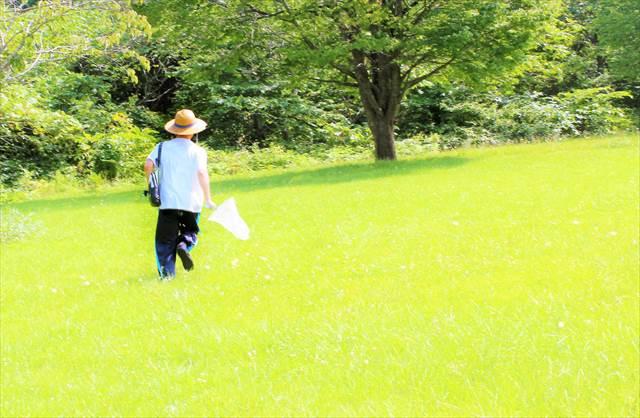 草原を走る夢の意味